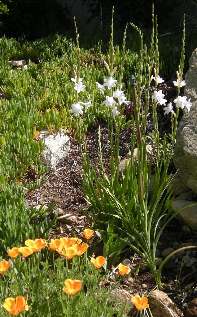 Garden April 2012 021