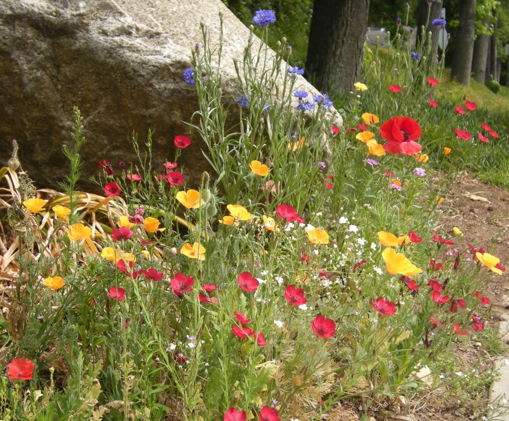 wildflowers, blanket 016